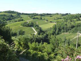 Dolce Romagna